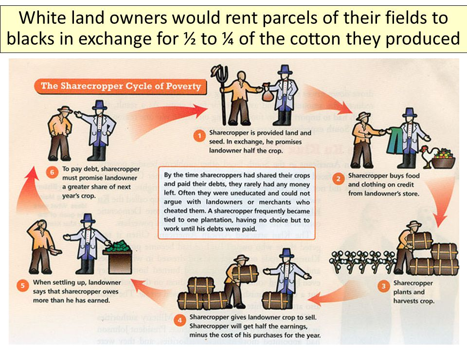 White land owners would rent parcels of their fields to blacks in exchange for ½ to ¼ of the cotton they produced