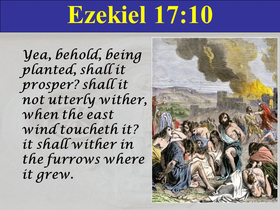 Ezekiel 17:10