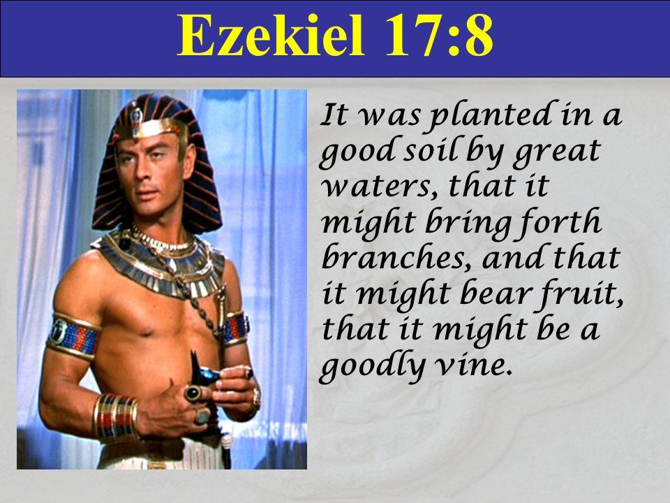 Ezekiel 17:8