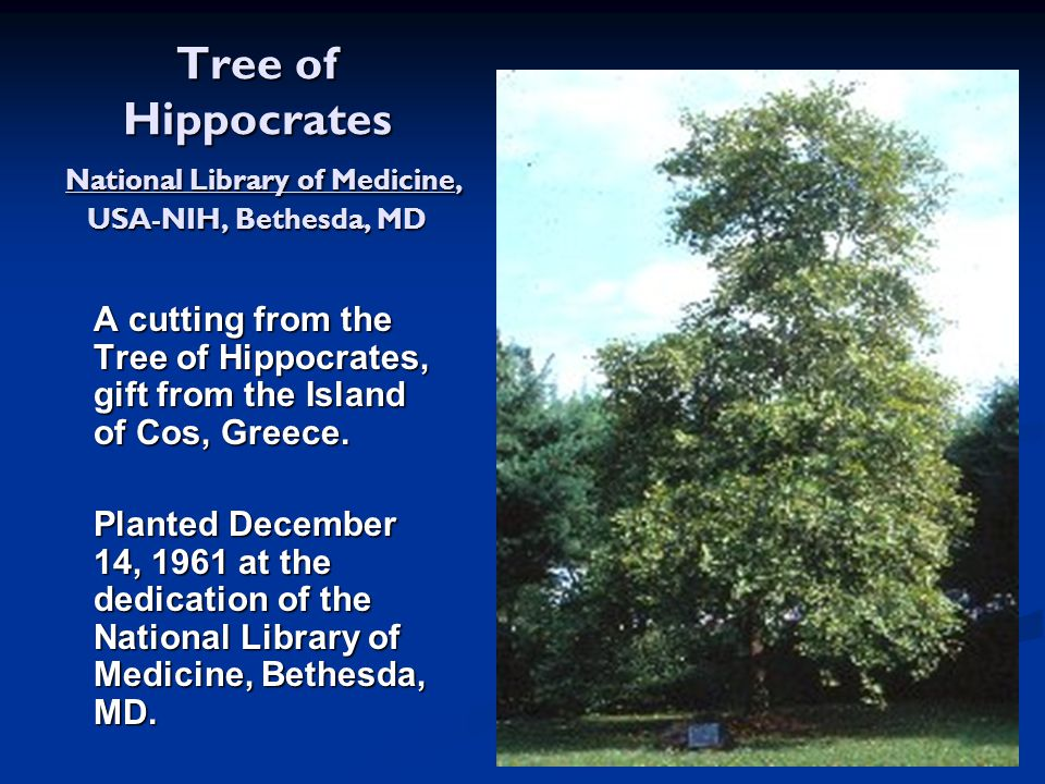 Tree of Hippocrates National Library of Medicine, USA-NIH, Bethesda, MD