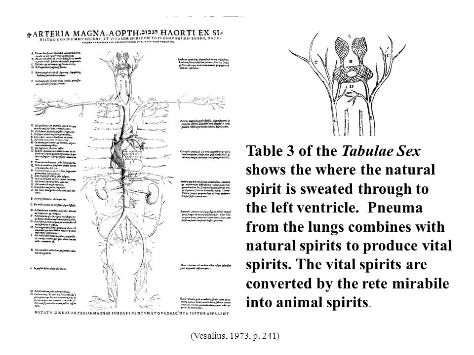 Table 3 of the Tabulae Sex shows the where the natural spirit is sweated through to the left ventricle. Pneuma from the lungs combines with natural spirits to produce vital spirits. The vital spirits are converted by the rete mirabile into animal spirits.