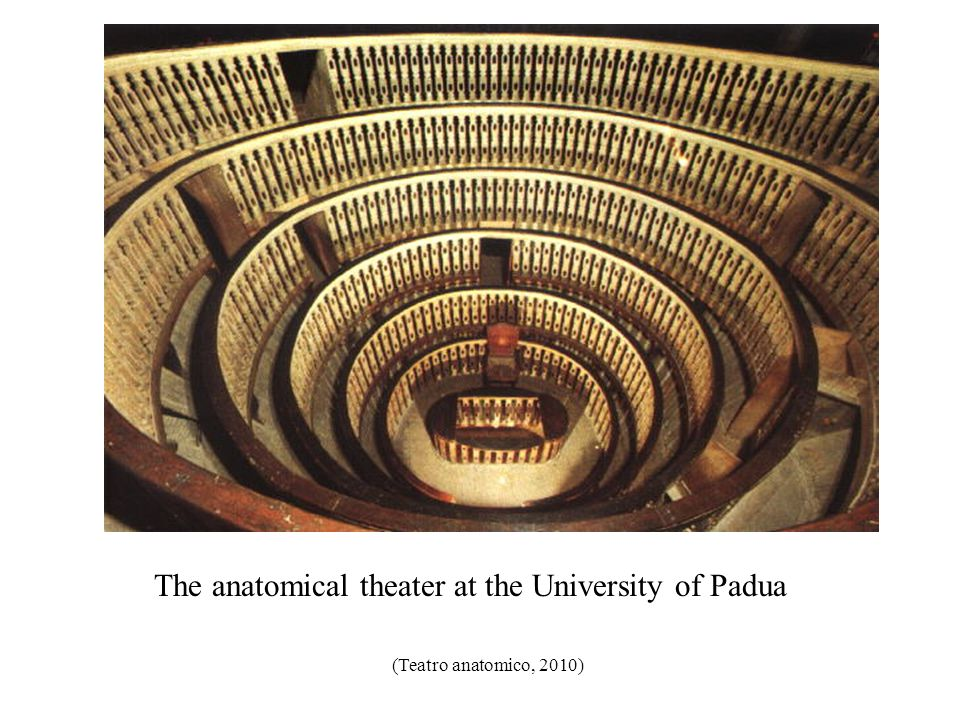 The anatomical theater at the University of Padua