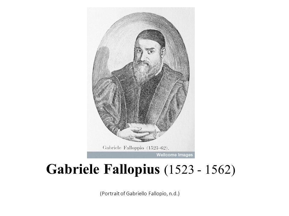 Gabriele Fallopius (1523 - 1562)