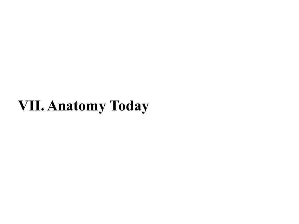 VII. Anatomy Today 50
