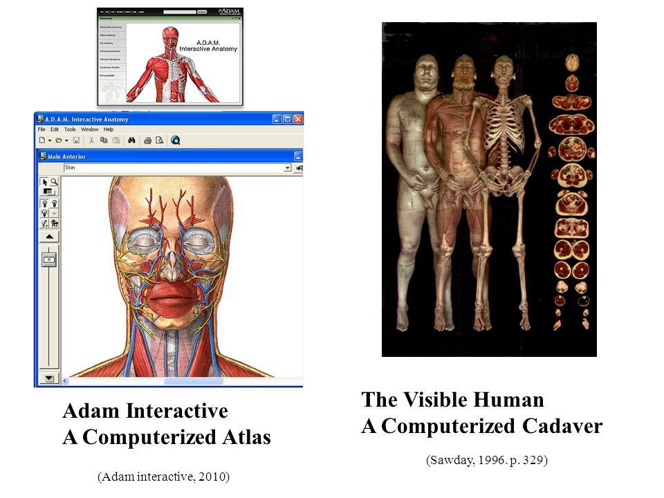 Vistoso Adam Anatomía Interactivo Ilustración - Anatomía de Las ...