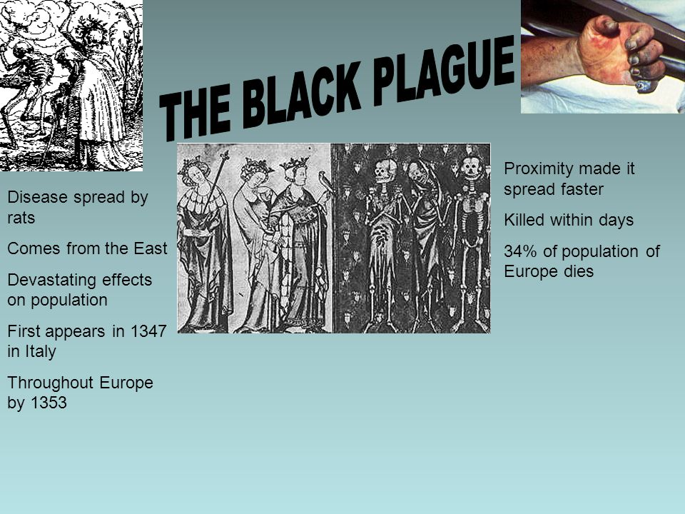THE BLACK PLAGUE Proximity made it spread faster Killed within days