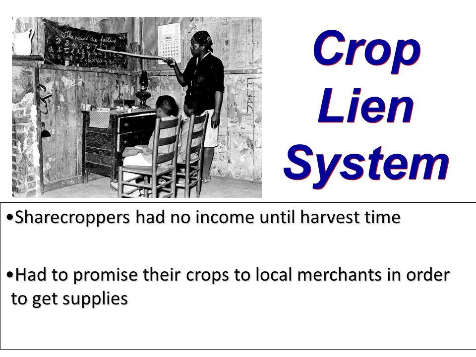 Crop Lien System Sharecroppers had no income until harvest time