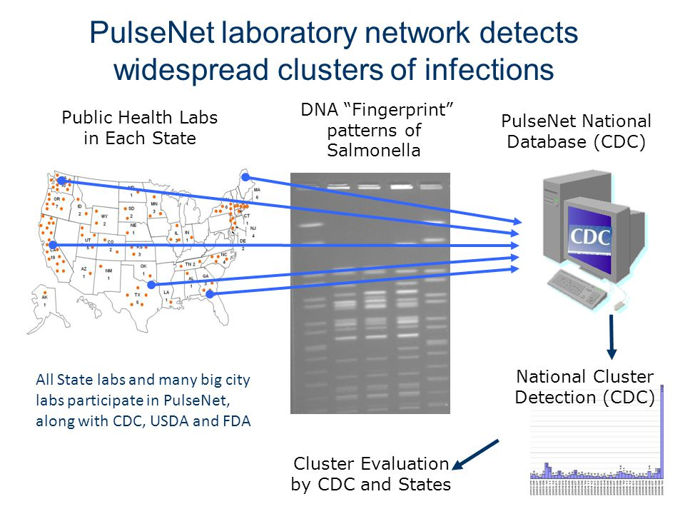 PulseNet laboratory network detects widespread clusters of infections