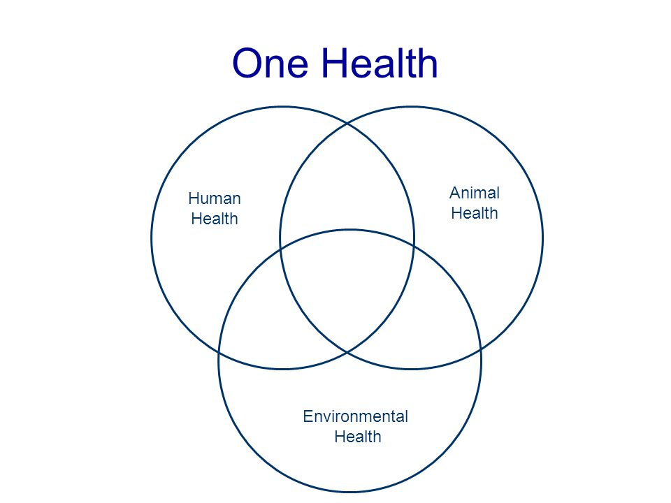One Health Animal Health Human Health Environmental Health