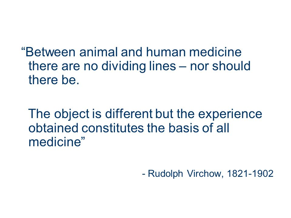 Between animal and human medicine there are no dividing lines – nor should there be.
