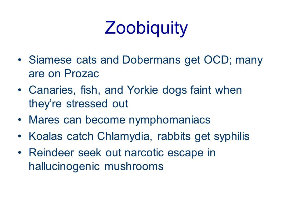 Zoobiquity Siamese cats and Dobermans get OCD; many are on Prozac