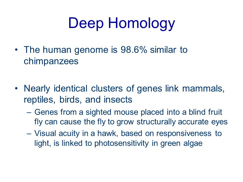 Deep Homology The human genome is 98.6% similar to chimpanzees