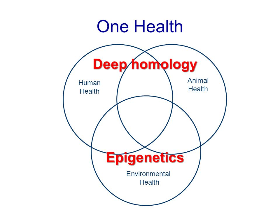 One Health Deep homology Epigenetics Animal Human Health Health