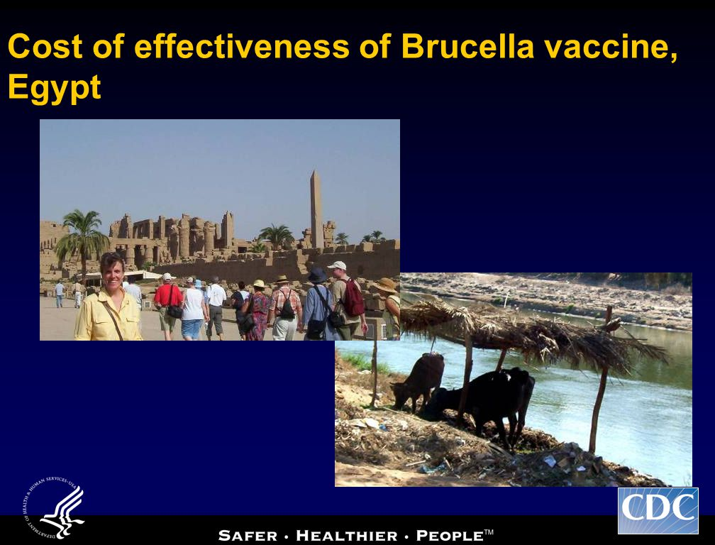 Cost of effectiveness of Brucella vaccine, Egypt