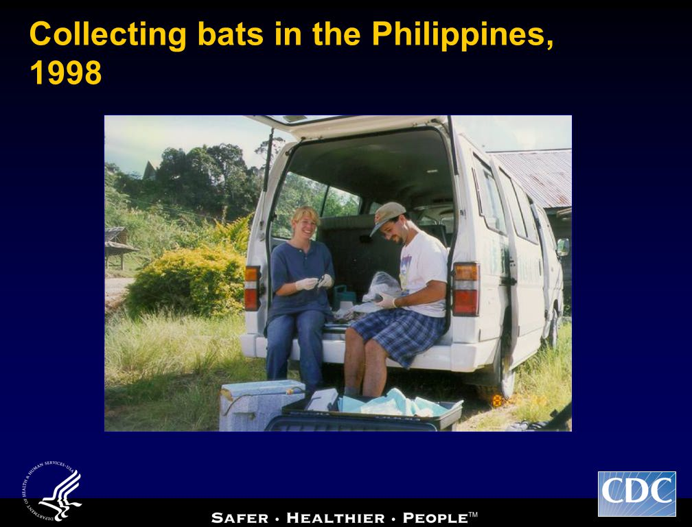 Collecting bats in the Philippines, 1998