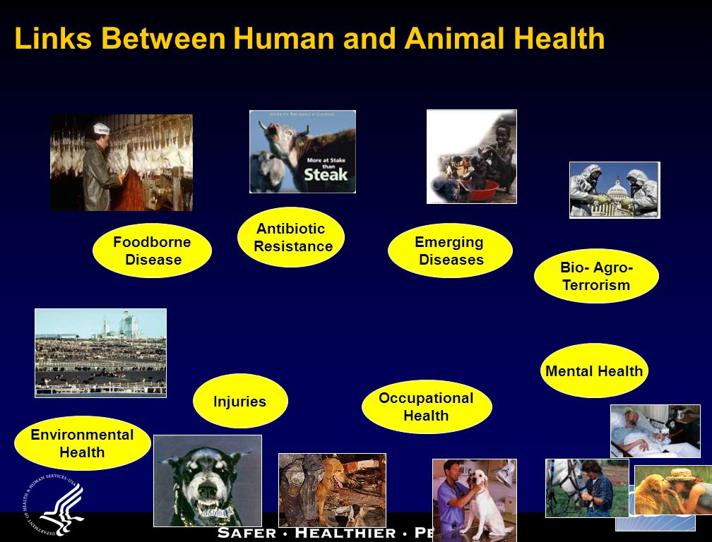 Links Between Human and Animal Health