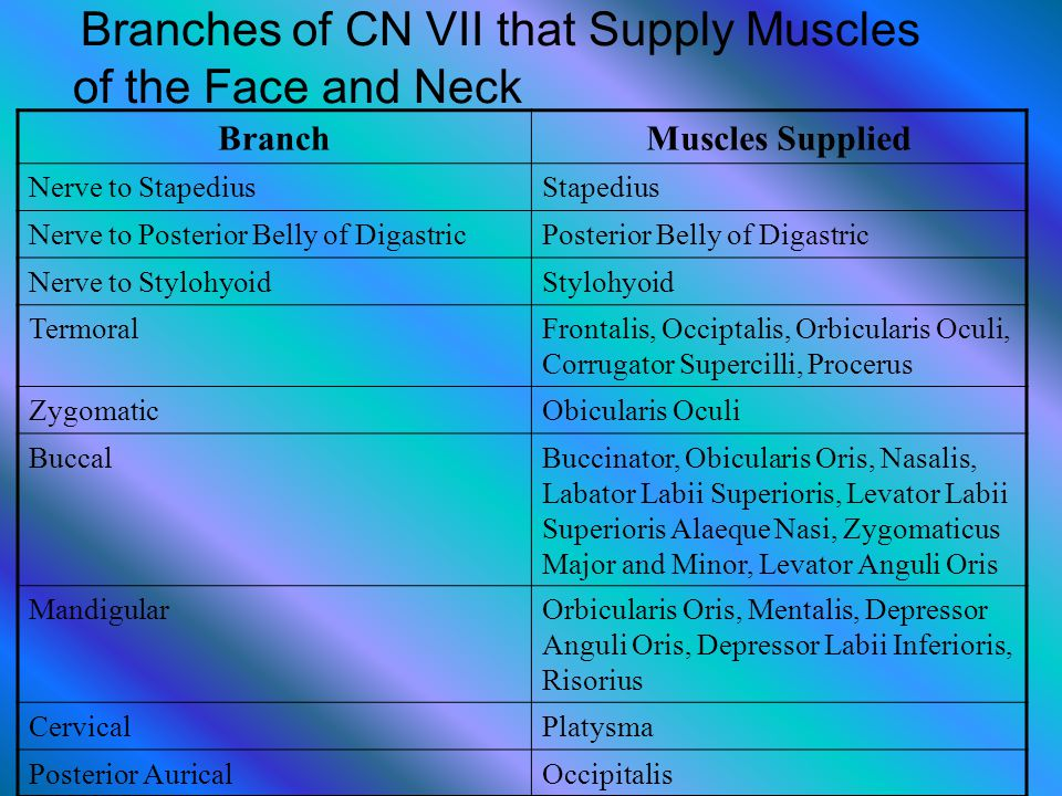 Branches of CN VII that Supply Muscles of the Face and Neck
