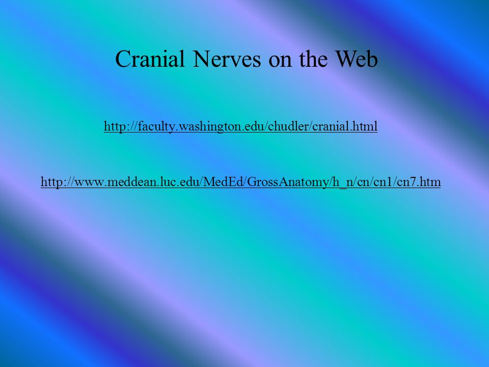 Cranial Nerves on the Web