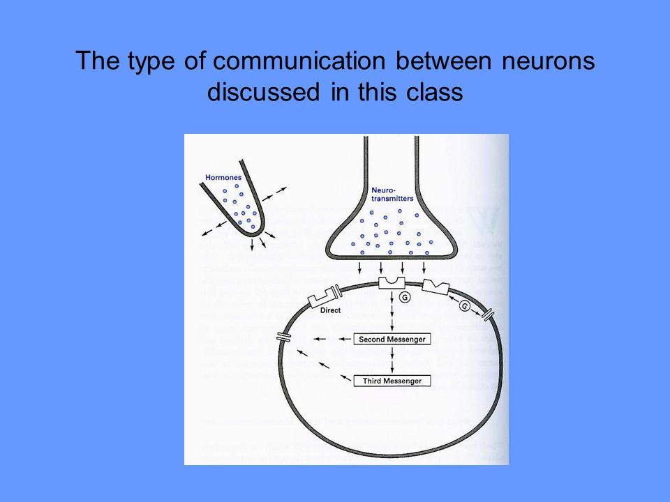 The type of communication between neurons discussed in this class