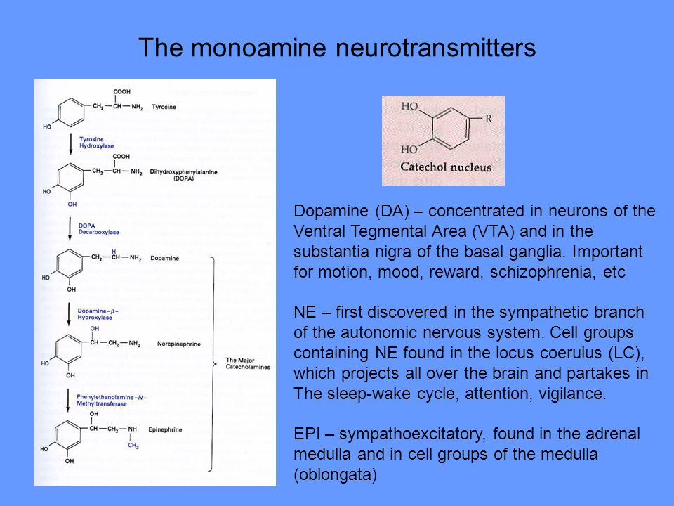 The monoamine neurotransmitters