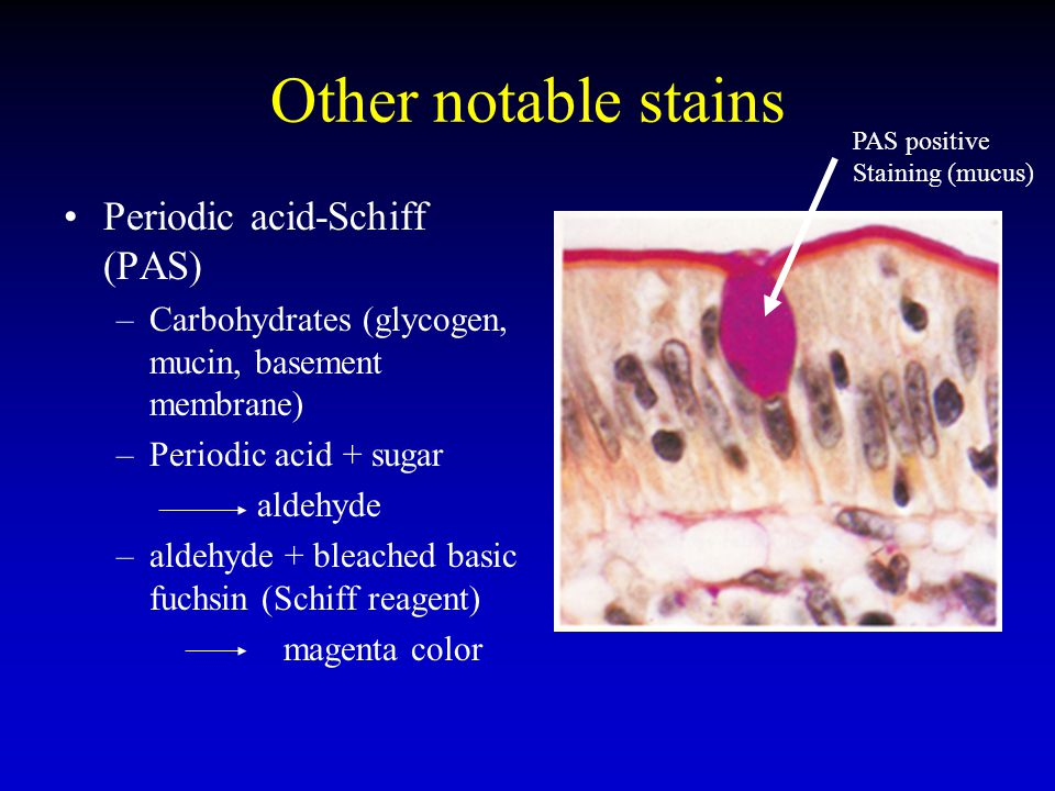 Other notable stains Periodic acid-Schiff (PAS)