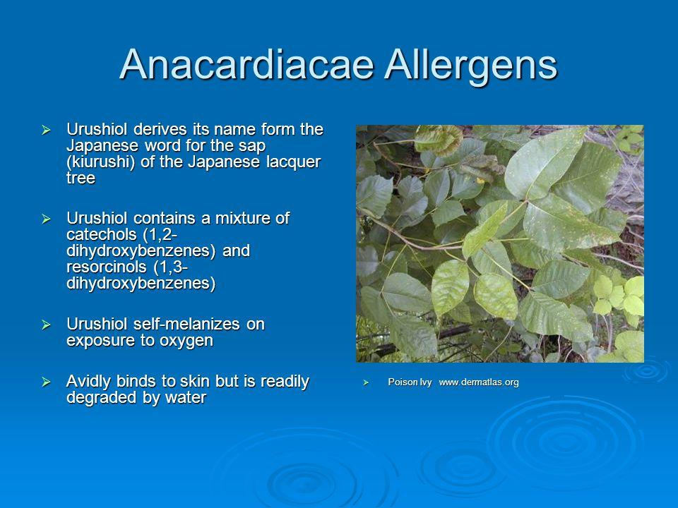 Anacardiacae Allergens