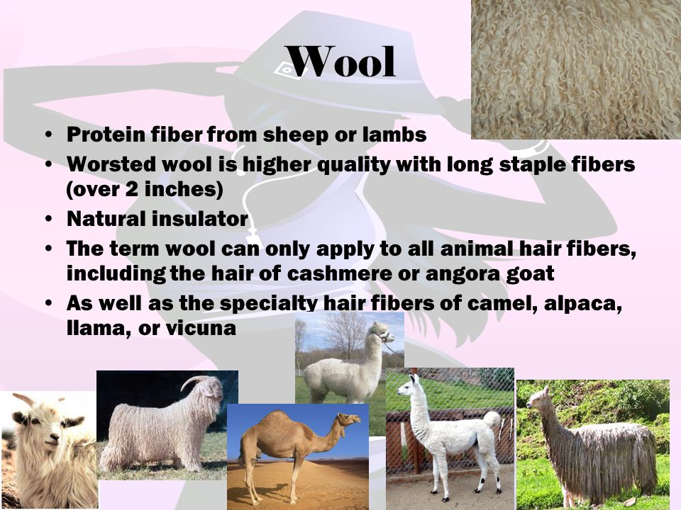 Wool Protein fiber from sheep or lambs