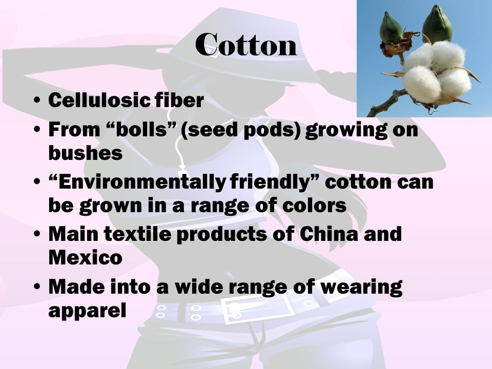 Cotton Cellulosic fiber From bolls (seed pods) growing on bushes