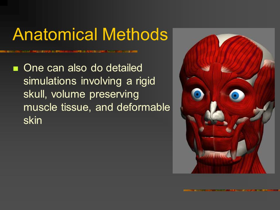 Anatomical Methods One can also do detailed simulations involving a rigid skull, volume preserving muscle tissue, and deformable skin.