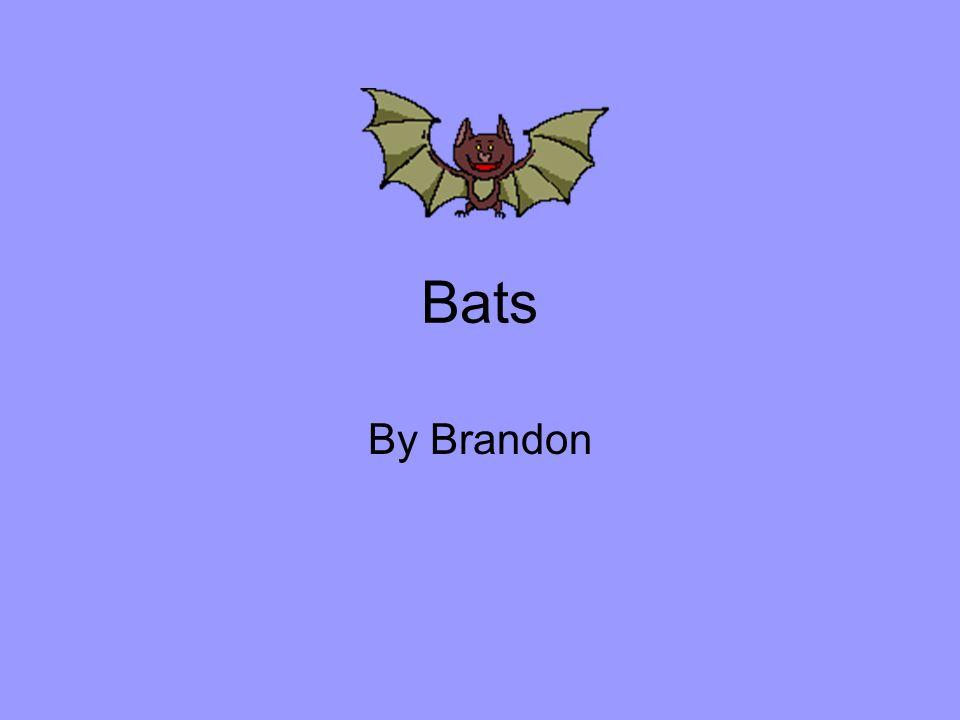Bats By Brandon
