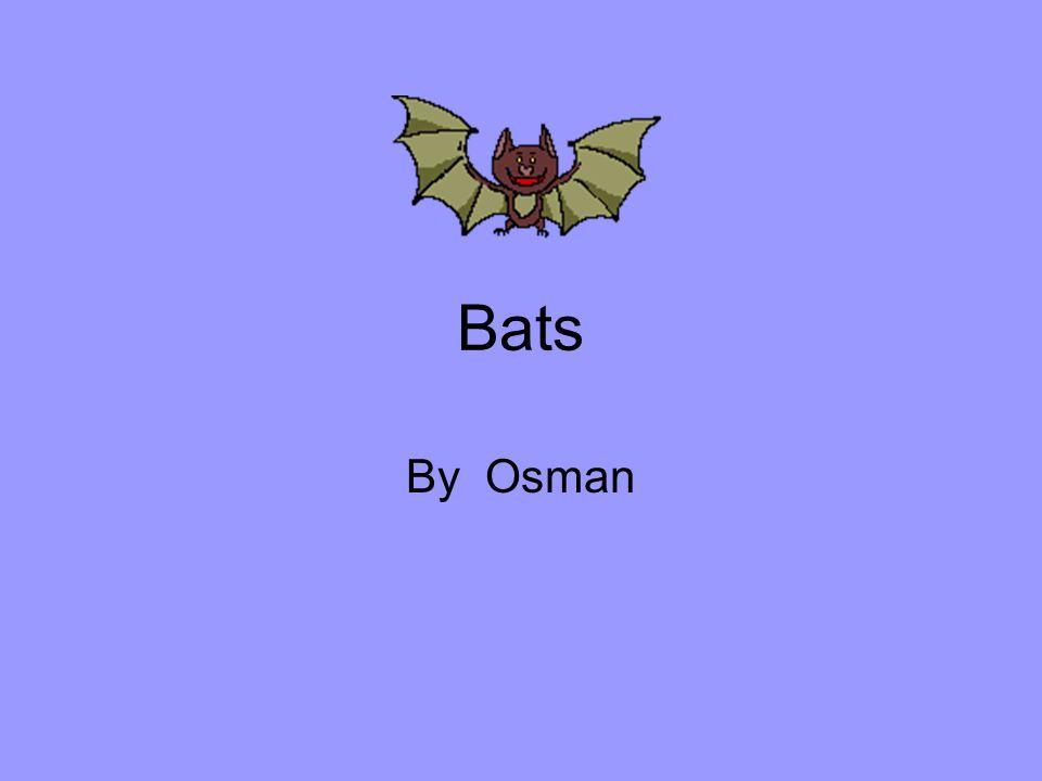 Bats By Osman