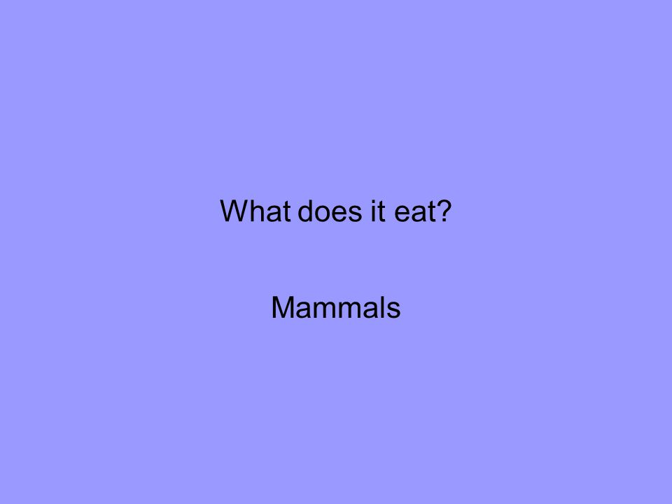 What does it eat Mammals