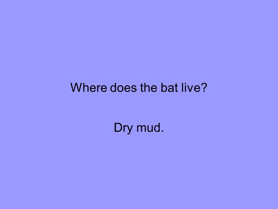 Where does the bat live Dry mud.