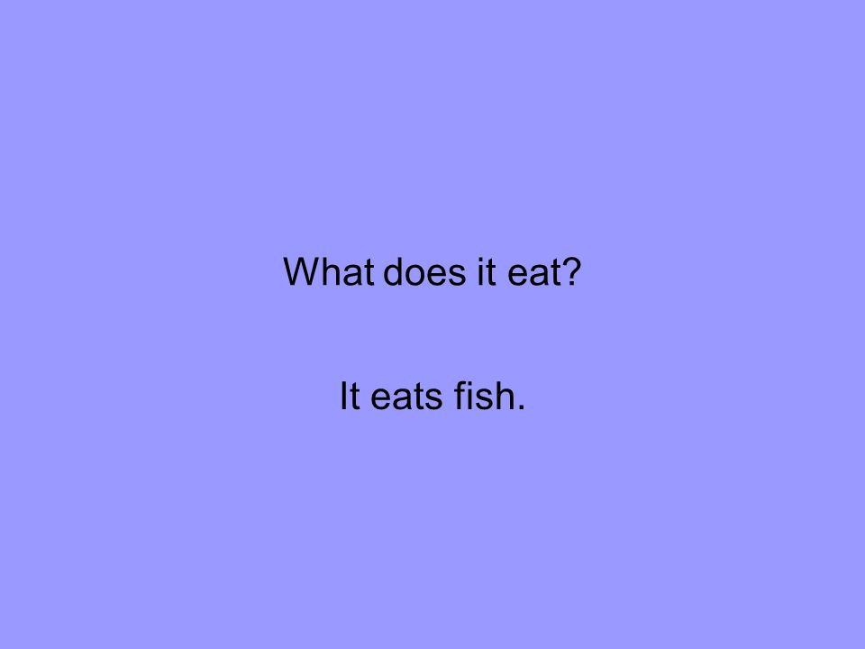 What does it eat It eats fish.