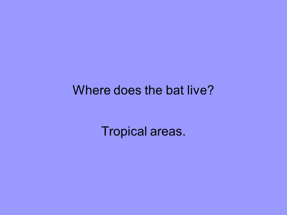 Where does the bat live Tropical areas.