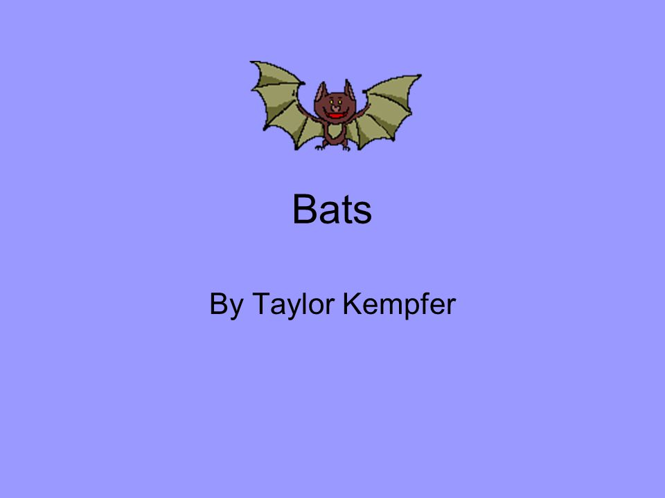 Bats By Taylor Kempfer