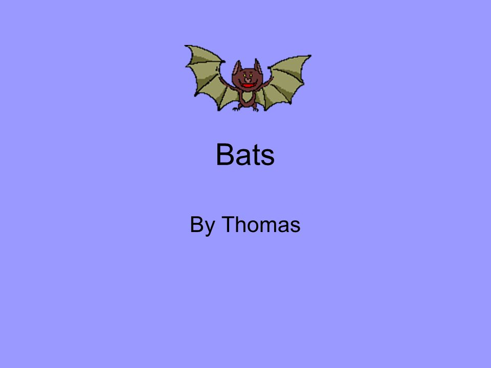 Bats By Thomas