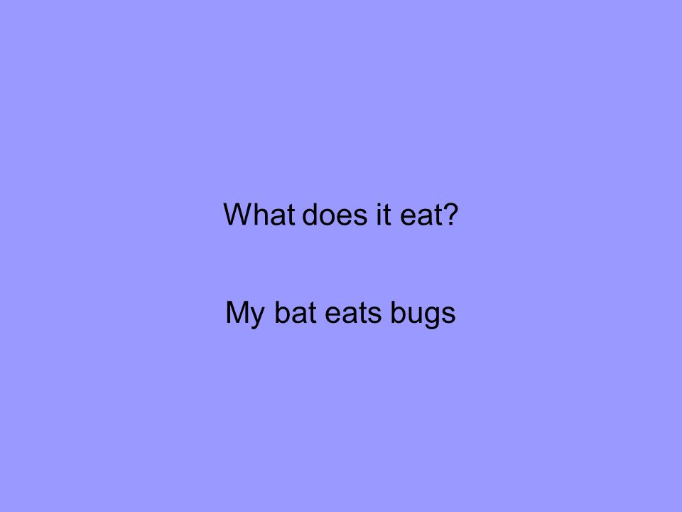 What does it eat My bat eats bugs
