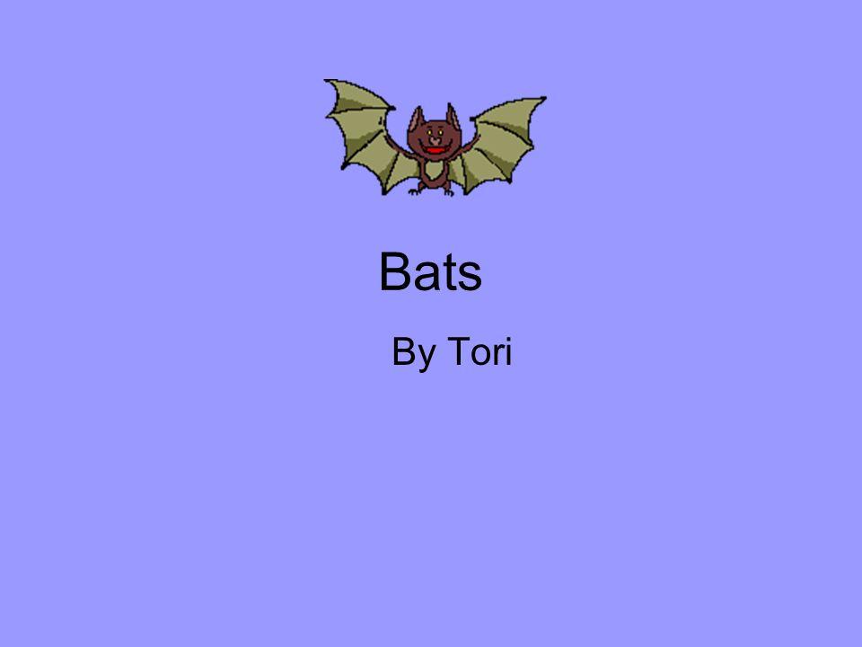 Bats By Tori
