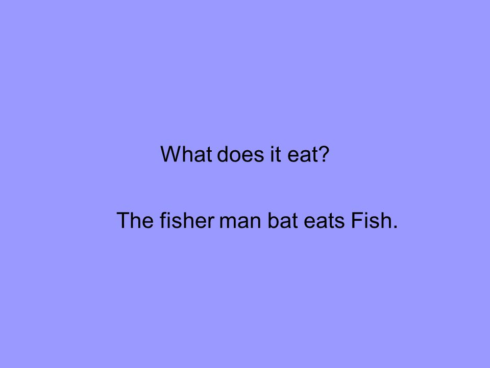 The fisher man bat eats Fish.