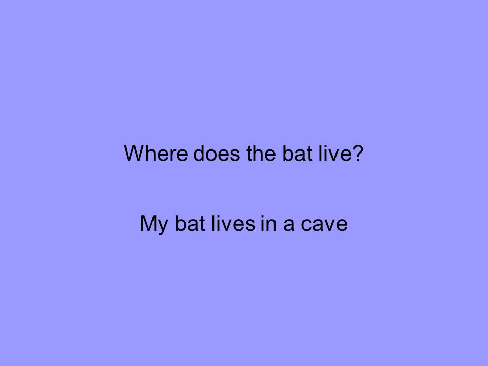 Where does the bat live My bat lives in a cave