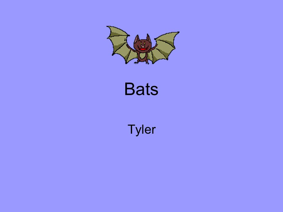 Bats Tyler