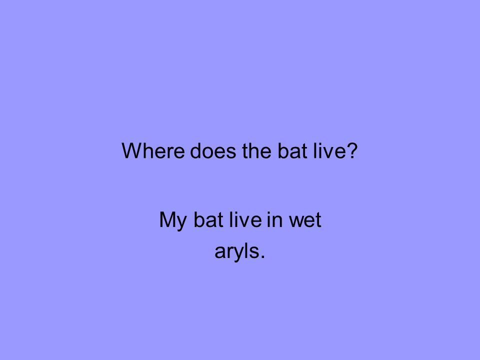 Where does the bat live My bat live in wet aryls.