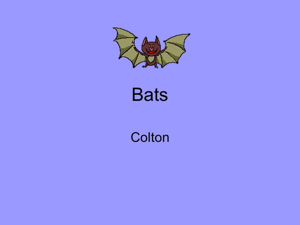 Bats Colton
