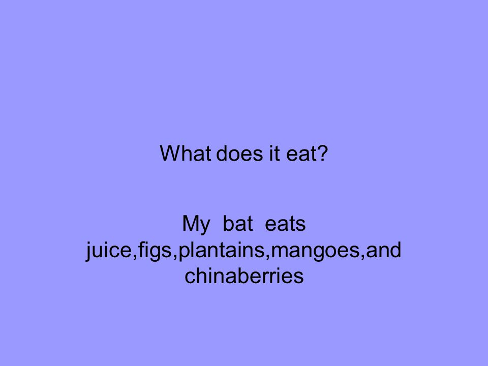 My bat eats juice,figs,plantains,mangoes,and chinaberries