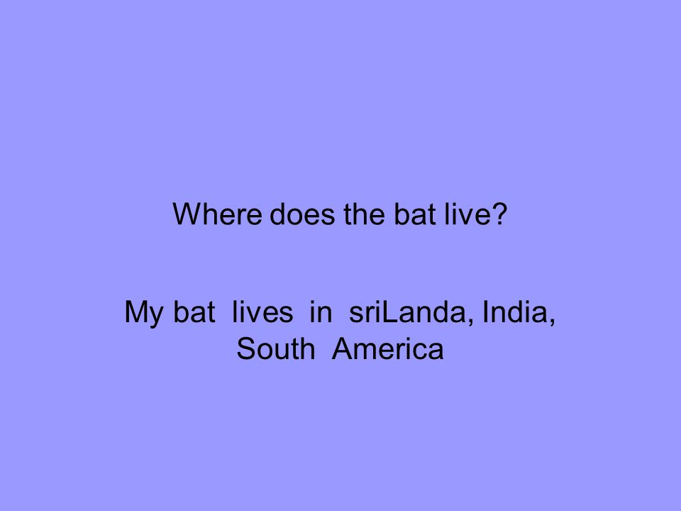 My bat lives in sriLanda, India, South America