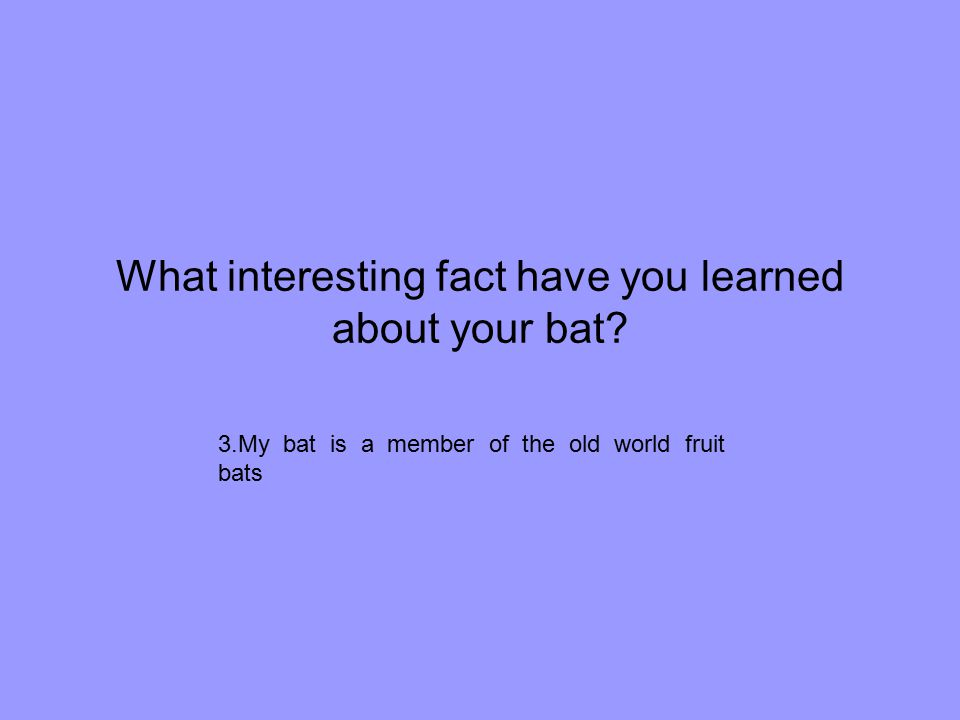 What interesting fact have you learned about your bat