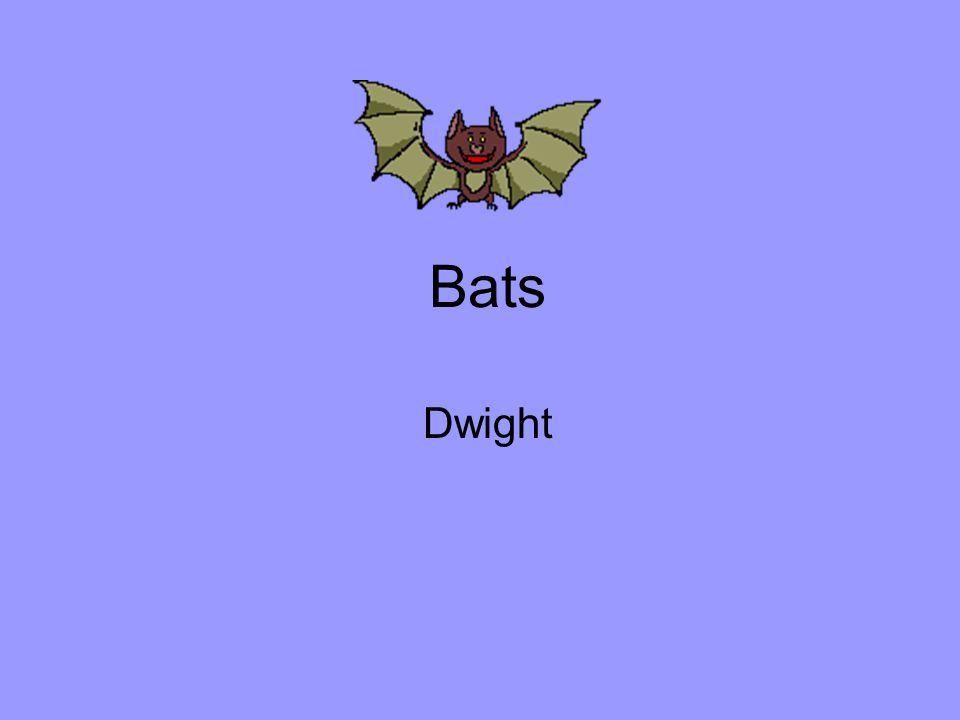 Bats Dwight