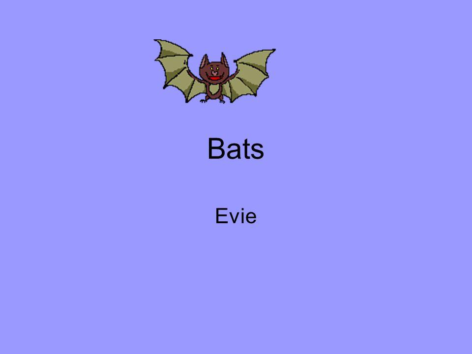 Bats Evie