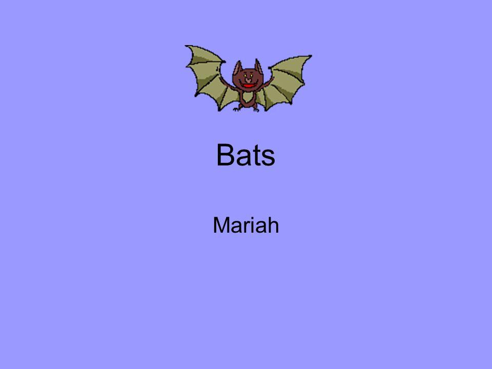 Bats Mariah